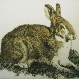 Walden Pond Rabbit