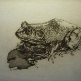 Walden Pond Frog