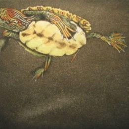 Walden Pond Turtle