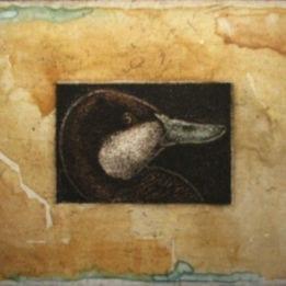 Walden Pond Duck