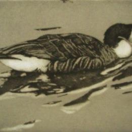 Walden Pond Goose