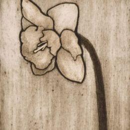 Daffodil 1 (daffodil collo-light)