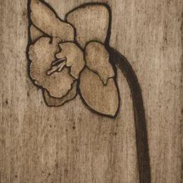 Daffodil 2 (daffodil collo-DARK)