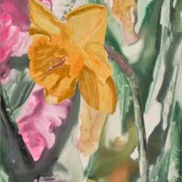 Daffodil 3 (daffodil WC)
