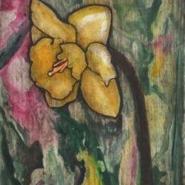 Daffodil 4 (daffodil combo)