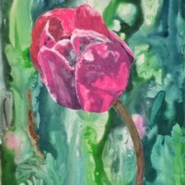 Pink Tulip 3 (pink tulip WC 1)