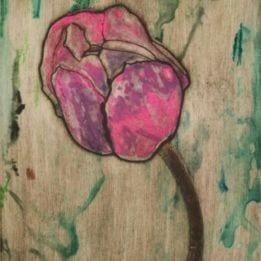 Pink Tulip 6 (pink tulip combo ghost 1)