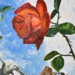 Rose 2 (rose WC)