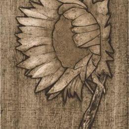 Sunflower 1 (sunflower collo-DARK)