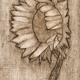 Sunflower 2 (sunflower collo-LIGHT)