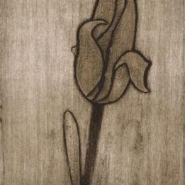 Yellow Tulip 1 (redyellow tulip collo-DARK)