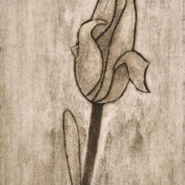 Yellow Tulip 2 (redyellow tulip collo-LIGHT)