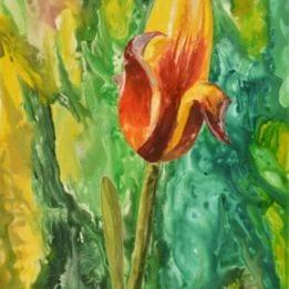 Yellow Tulip 3 (redyellow tulip WC)
