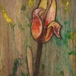 Yellow Tulip 4 (redyellow tulip combo)