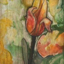 Yellow Tulip 5 (redyellow tulip combo 2)